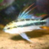 fishgeek